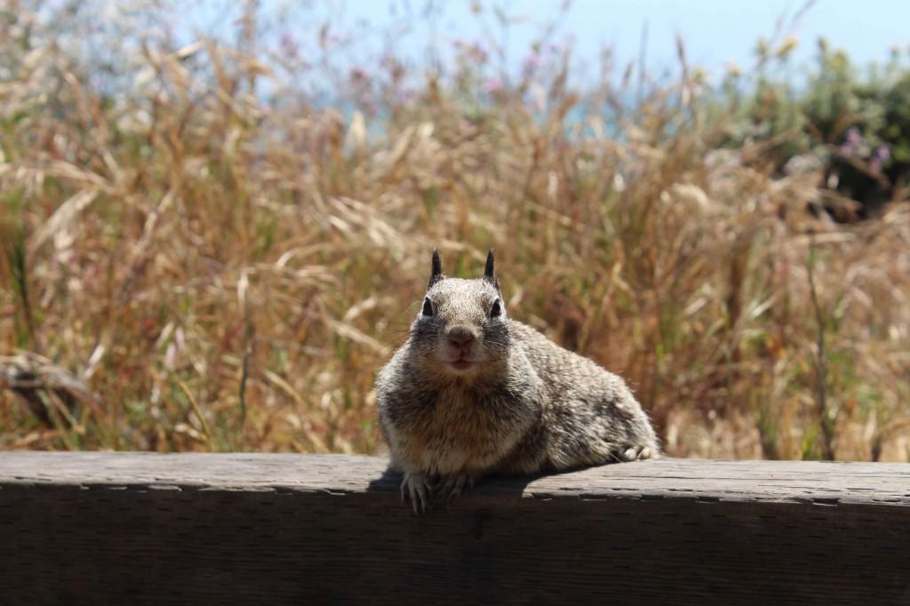 ecureuil cambria 2