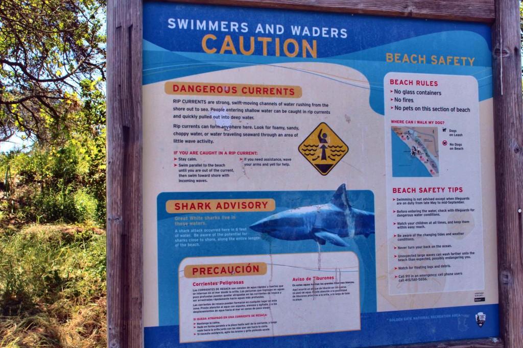 marin county sharks.JPG