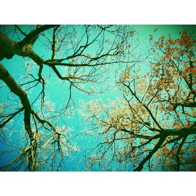 Good morning ! #livefolk #liveauthentic #vsco #instagram #winter #autumn #tree #instagood