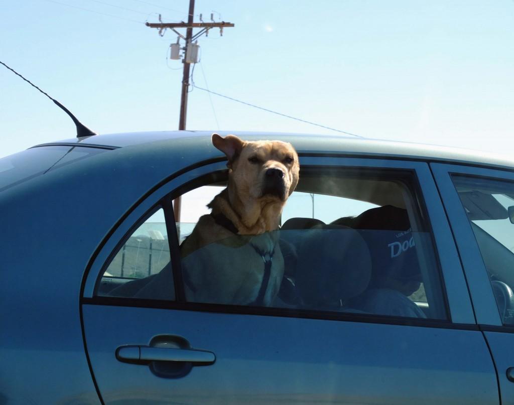 chien highway