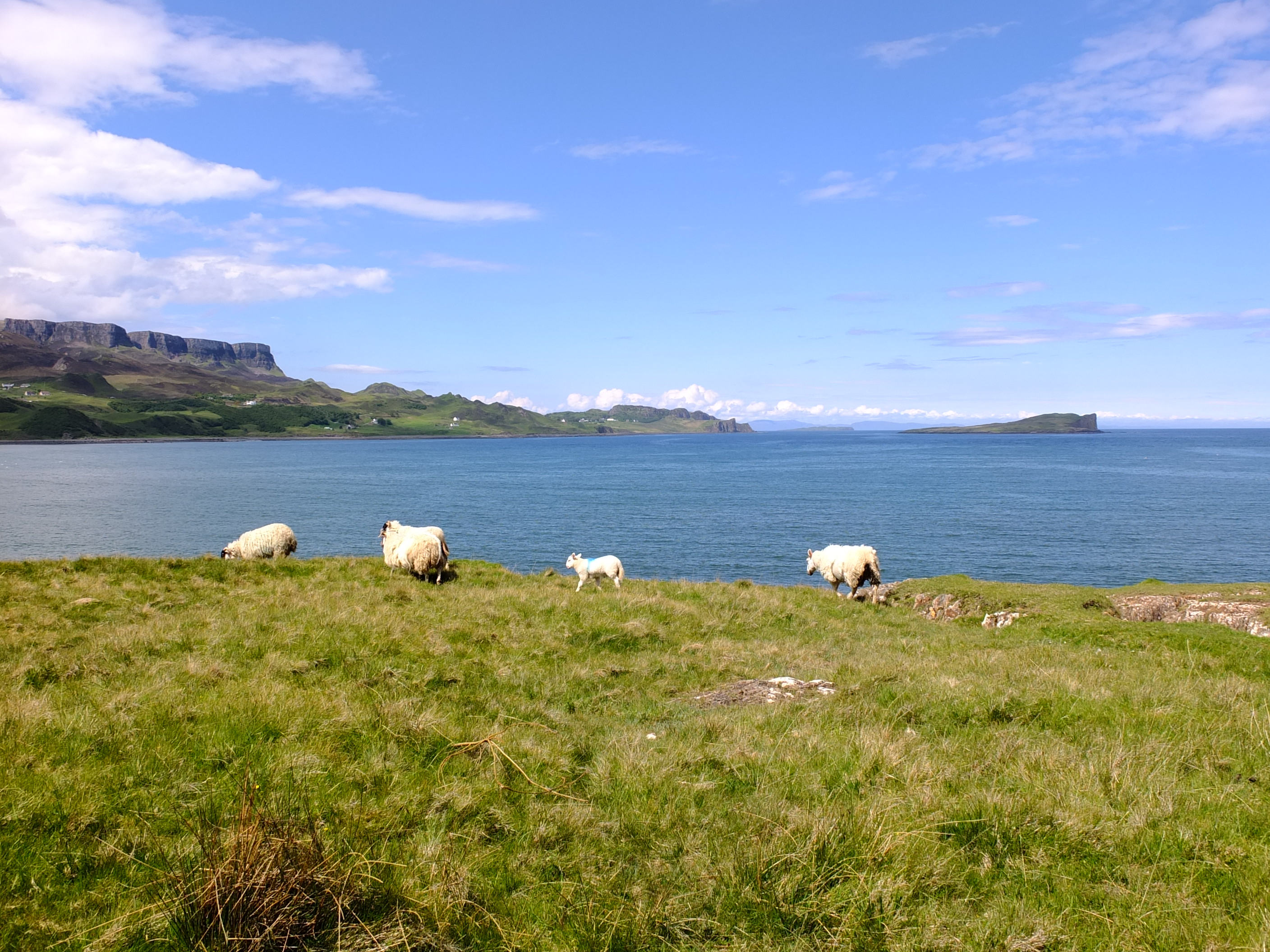 ile de skye trotternish (10)